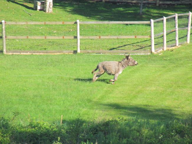 Donkey on the Run