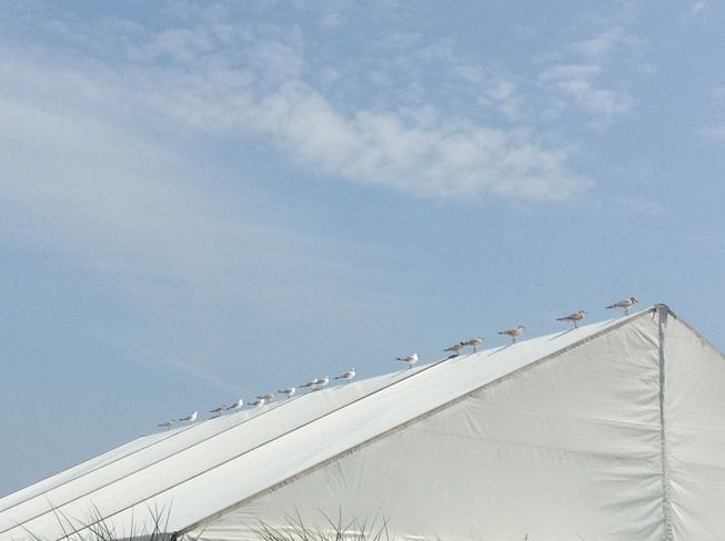 seagulls Niagara Falls, Ontario Canada