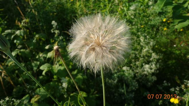 flowers Summerside, Prince Edward Island Canada