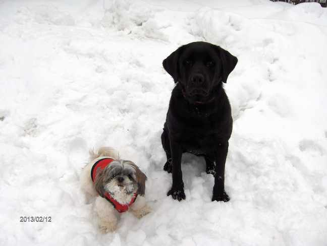 Tiny & Tessa Playing in Fresh Snow Massey, Ontario Canada