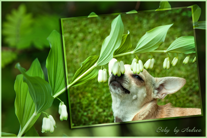 Baby Smelling Lily of the Valley Meadow Lake, Saskatchewan Canada