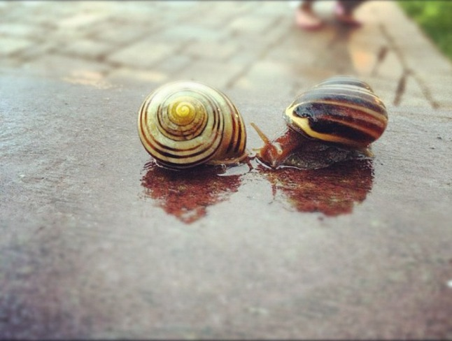 Love snails Sault Ste. Marie, Ontario Canada