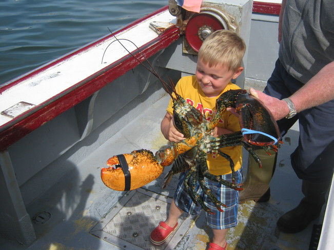 Owen Mackay 12 pound lobster Murray Harbour, Prince Edward Island Canada