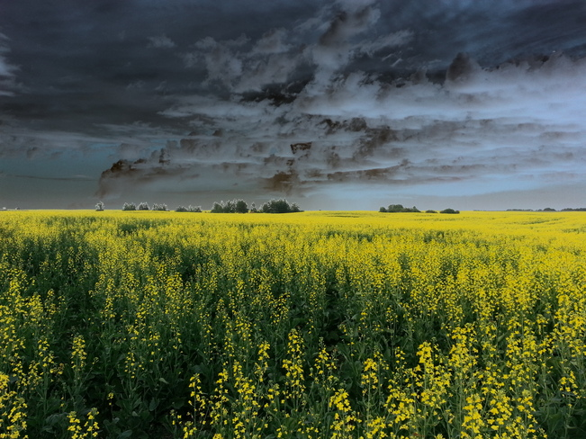 Storm Clouds on the Horizon Cold Lake, Alberta Canada