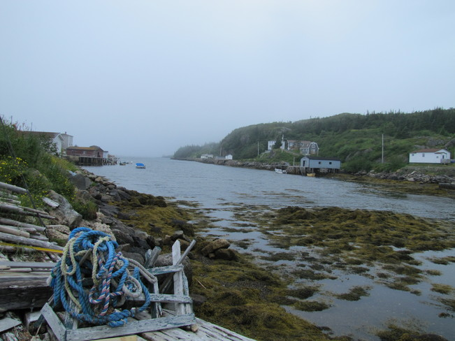Fog and drizzle Rock Harbour, Newfoundland and Labrador Canada