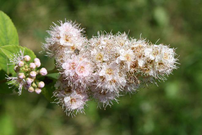 Summer Bloom Temiskaming Shores, Ontario Canada