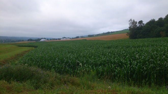 Farms in Wolfville area Loved the Recent Rain. Wolfville, Nova Scotia Canada