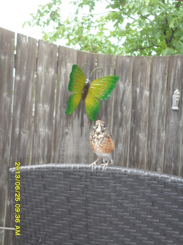 Butterfly and Baby Robin Tecumseh, Ontario Canada