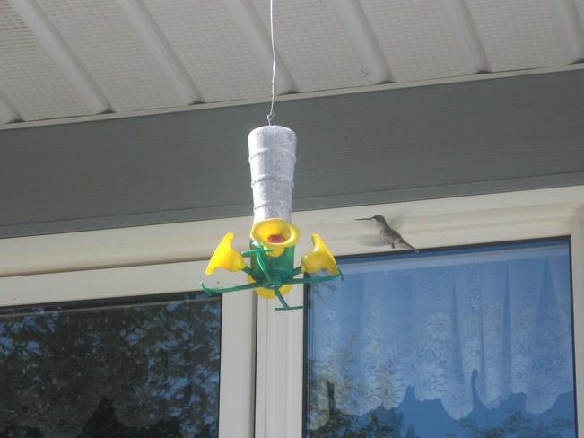 Hummingbird Lakeville, New Brunswick Canada