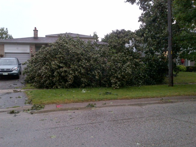 JULY 19/13 SEVERE WINDS TAKE DOWN TREE Georgetown, Ontario Canada