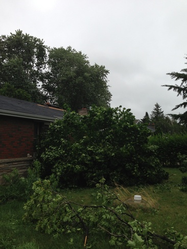 tree down on front lawn Mount Hope, Ontario Canada
