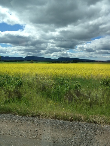 mustard fields for ever Slate River Valley, Ontario Canada