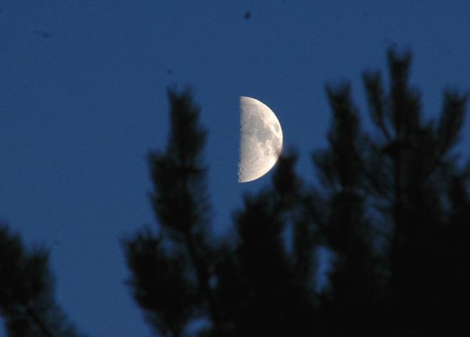 Half Moon Burnaby, British Columbia Canada