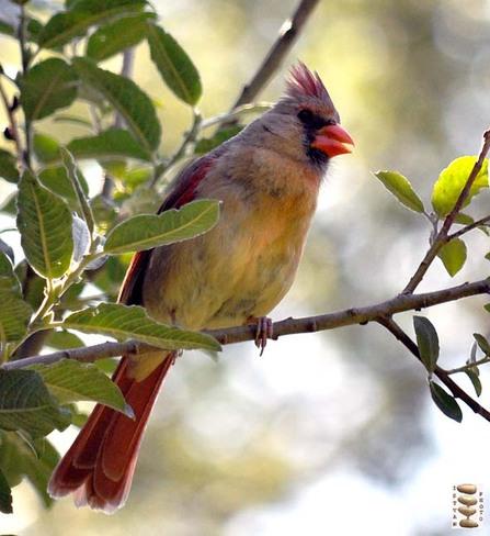 Cardinal Toronto, Ontario Canada