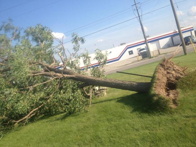 side view of tree uprooted Paris, Ontario Canada