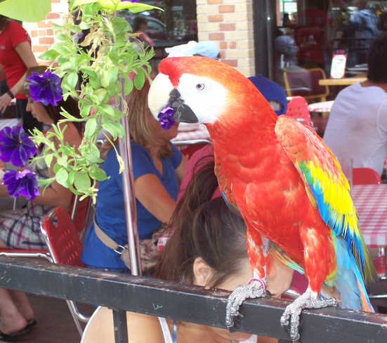 Parrot in the Market Ottawa, Ontario Canada
