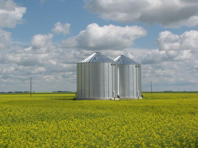 Granaries in Canola Field Regina, Saskatchewan Canada