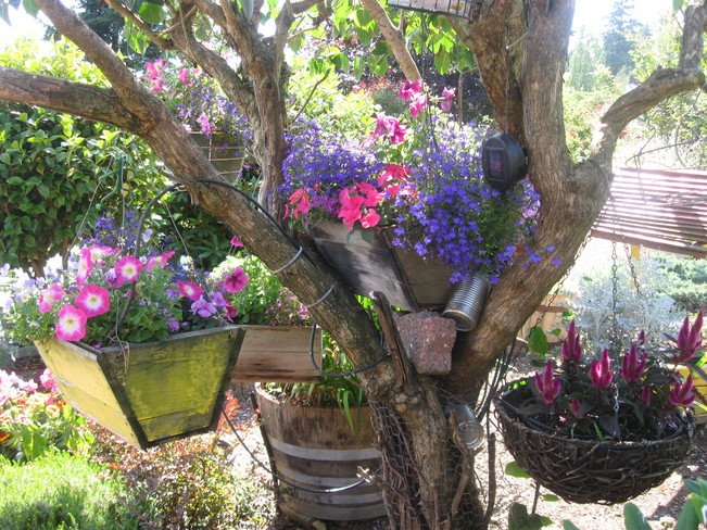 my tree of many baskets... Surrey, British Columbia Canada