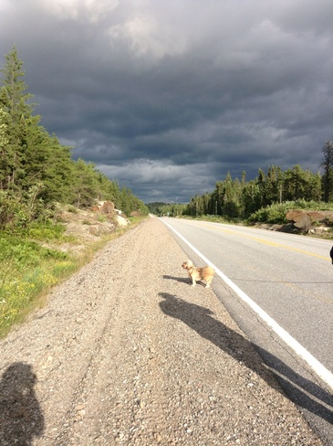 Dixie Checking out the Passing Storm Atikokan, Ontario Canada