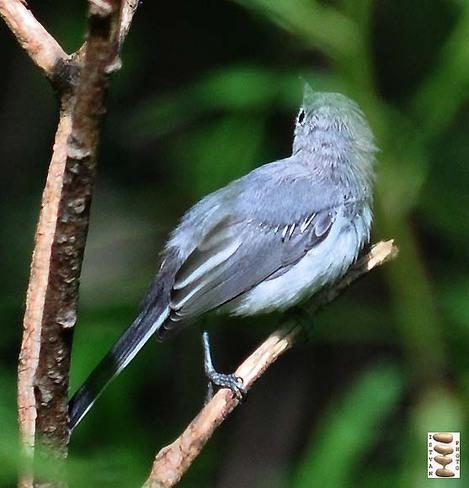The blue bird Toronto, Ontario Canada