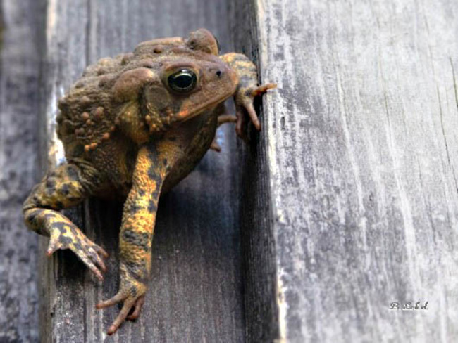 Door to door toad stool sales rep Port Dover, Ontario Canada