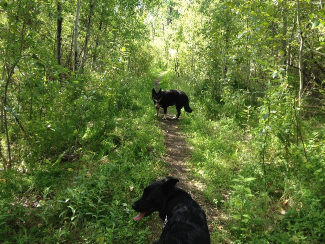another walk with the dogs Winnipeg, Manitoba Canada