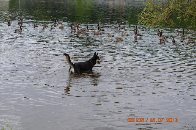 Going in for a swim Ottawa, Ontario Canada