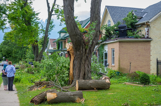 Downed Tree Kitchener, Ontario Canada
