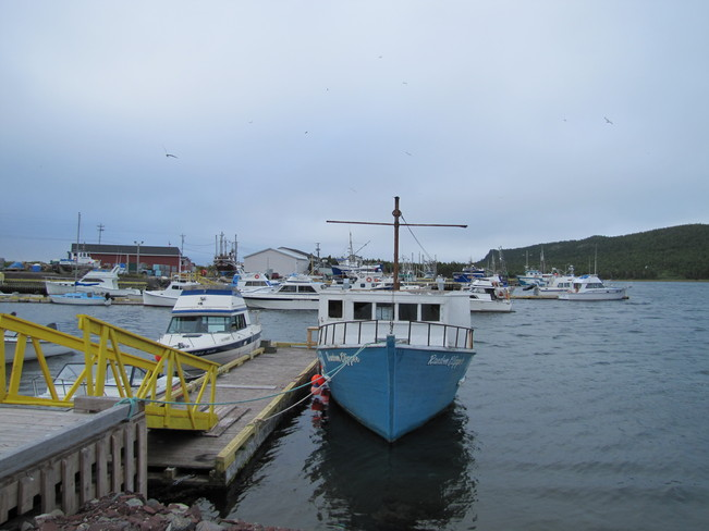 Boats off NL Norman's Cove-Long Cove, Newfoundland and Labrador Canada