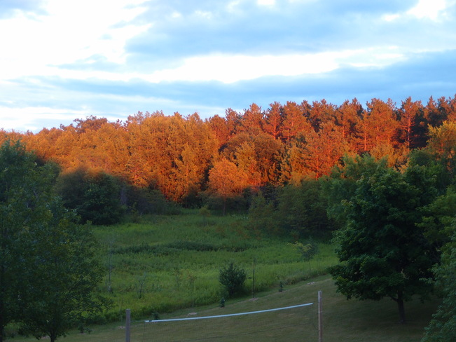 Taken from the patio - sunset lighting up Durham forest.