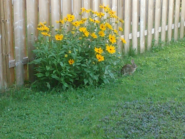 Flowers with a rabbit Orleans, Ontario Canada
