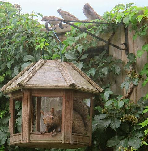 Perplexed birds London, Ontario Canada