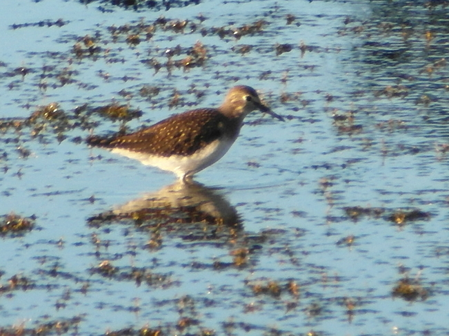 sandpiper out by bearspa Calgary, Alberta Canada