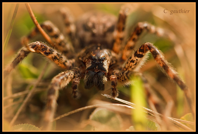 Up close and personal with a spider. Magnetawan, Ontario Canada