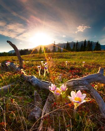 2b. Bow Valley Spring