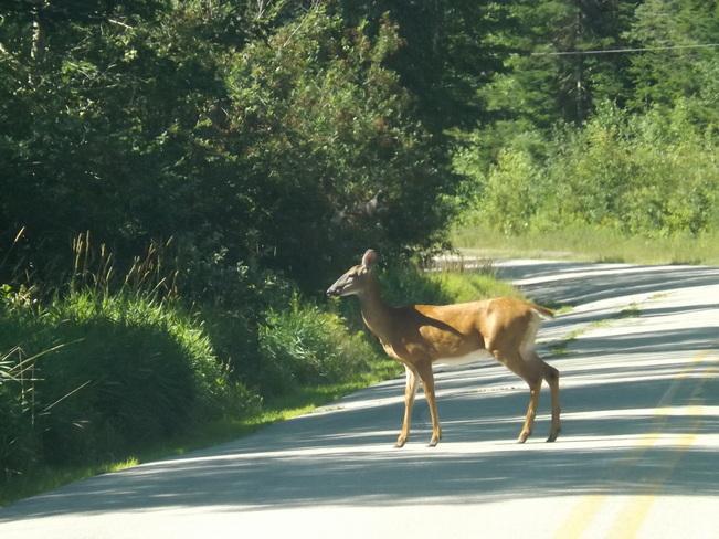 hello there Wolfville, Nova Scotia Canada