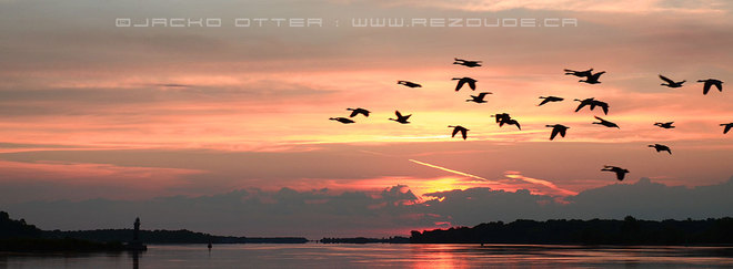 Gooses over St-Lawrence Akwesasne, Ontario Canada