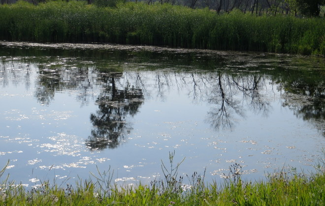 Reflections on the Pond Brandon, Manitoba Canada
