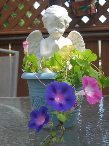 pretty flowers and angel Eastern Passage, Nova Scotia Canada