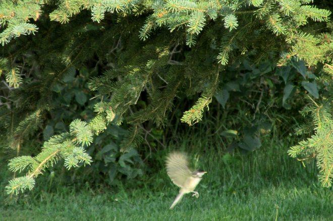 Bird in Flght