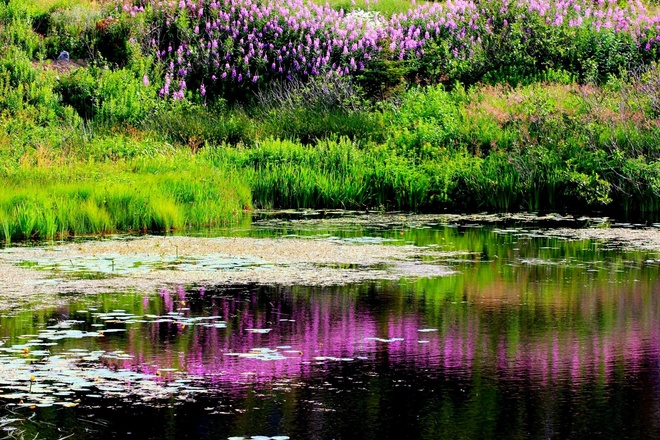 Awesome reflection Mount Pearl, Newfoundland and Labrador Canada