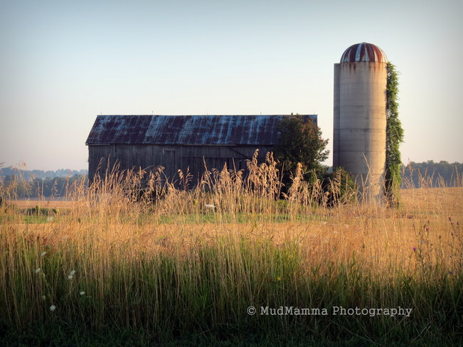 Peaceful farm Benmiller, Ontario Canada