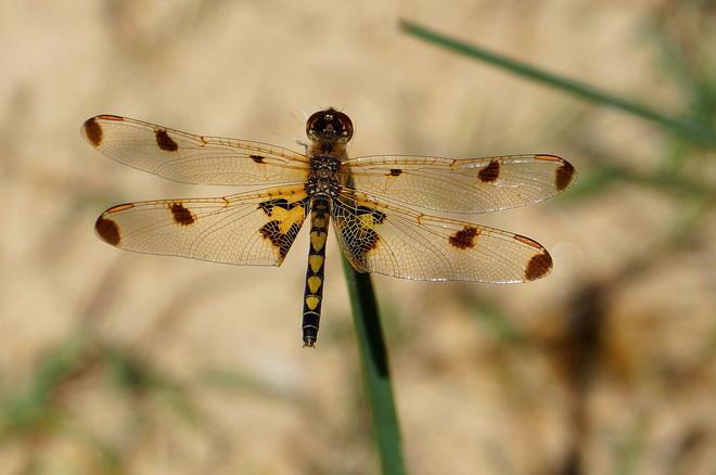 A dragonfly Toronto, Ontario Canada