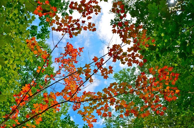 First signs of fall Oakville, Ontario Canada