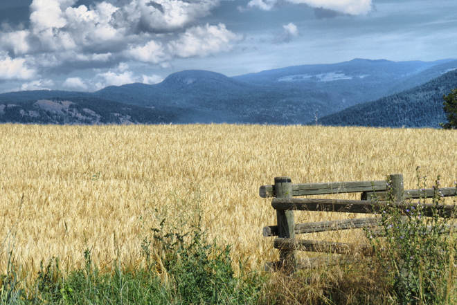 Summer Agricultural Scenery Armstrong, British Columbia Canada