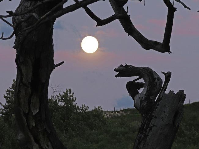 Baying at the Moon Lethbridge, Alberta Canada