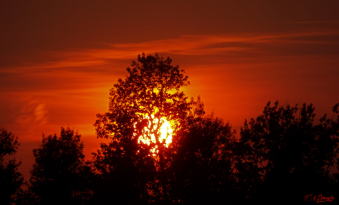 Sunset behind the trees Smiths Falls, Ontario Canada
