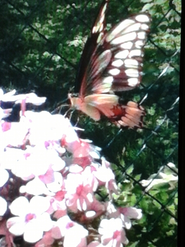 butterfly picnic Essex, Ontario Canada