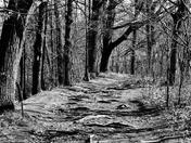 Path Less Taken