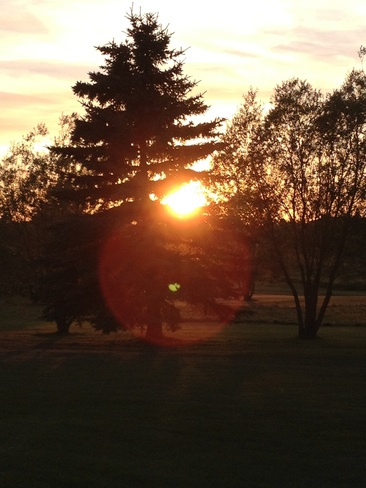 sun in the trees out golfing Sylvan Lake, Alberta Canada